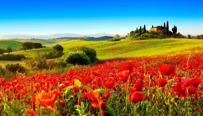 Flores en la Toscana